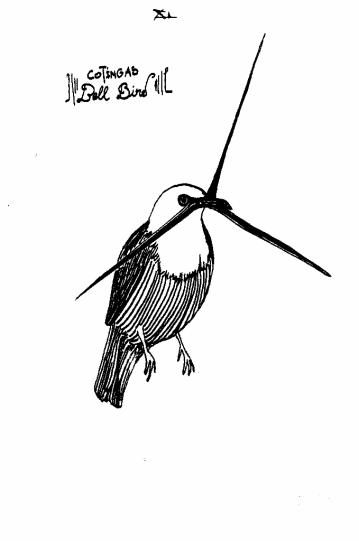 2011 Cotingas Bell Bird (679x1024)